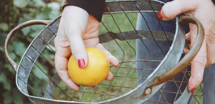 lemon diy basket